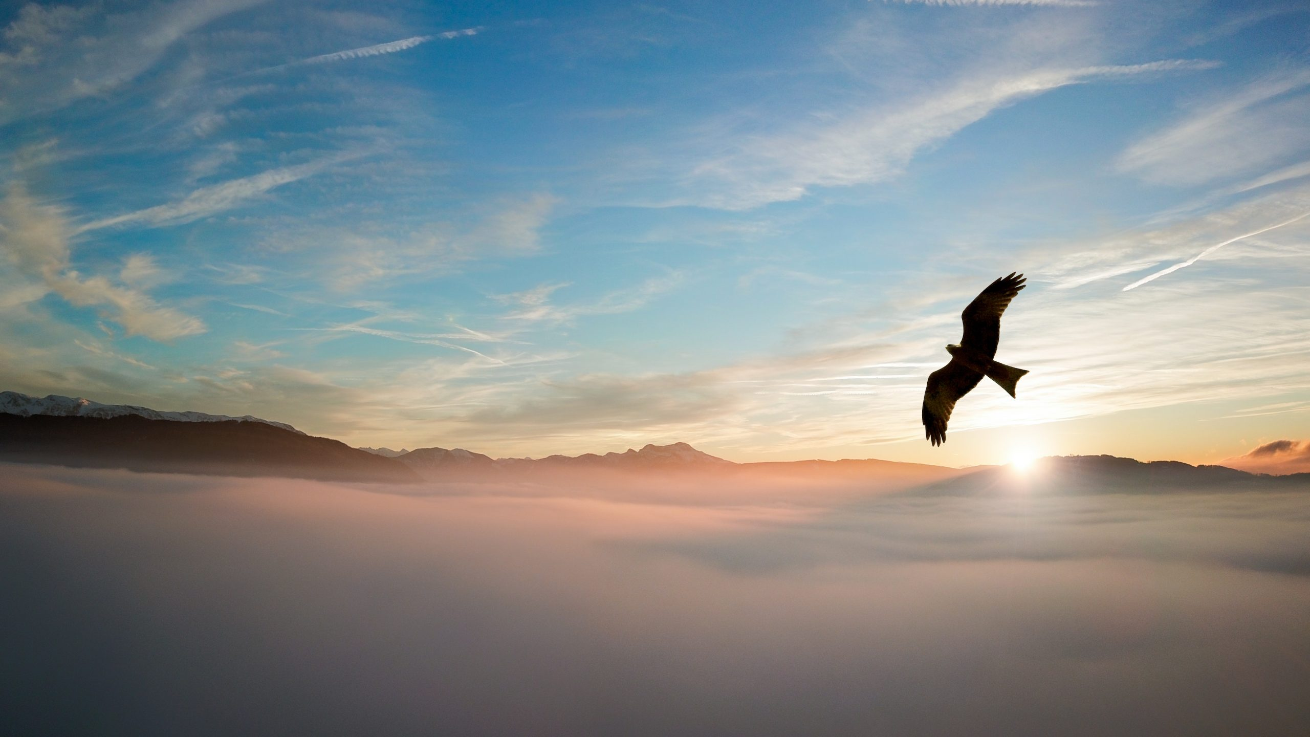 an image of an eagle soarin above the clouds