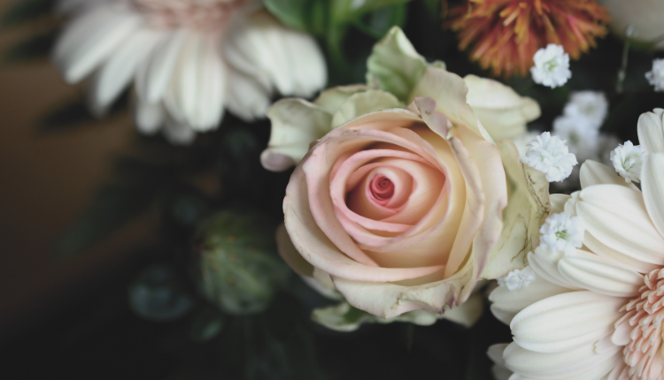 photo of a rose and other flowers