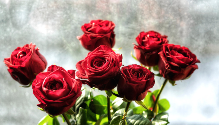 Photo of seven red roses